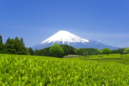 富士山の茶畑テアニン